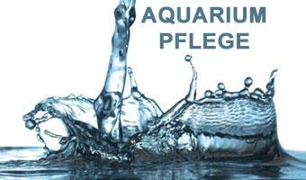 aquarium-pflege